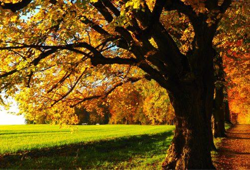 Jahreskreisfest Herbst Tag- und Nachtgleiche